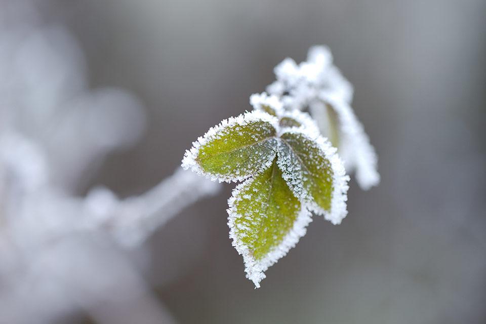 Winterharde planten en bloemen