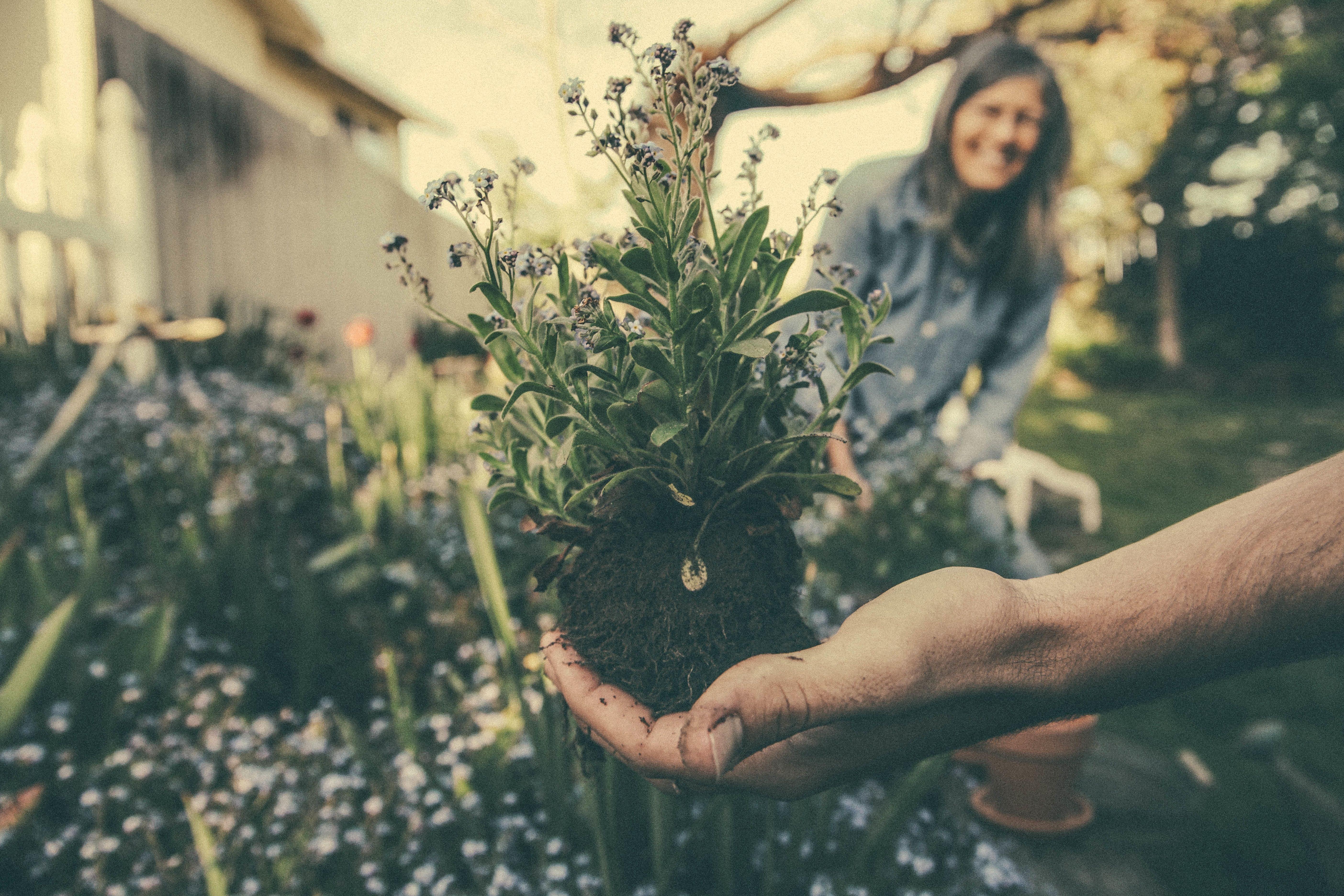 Nieuwe tuin aanleggen: wat komt daar allemaal bij kijken?