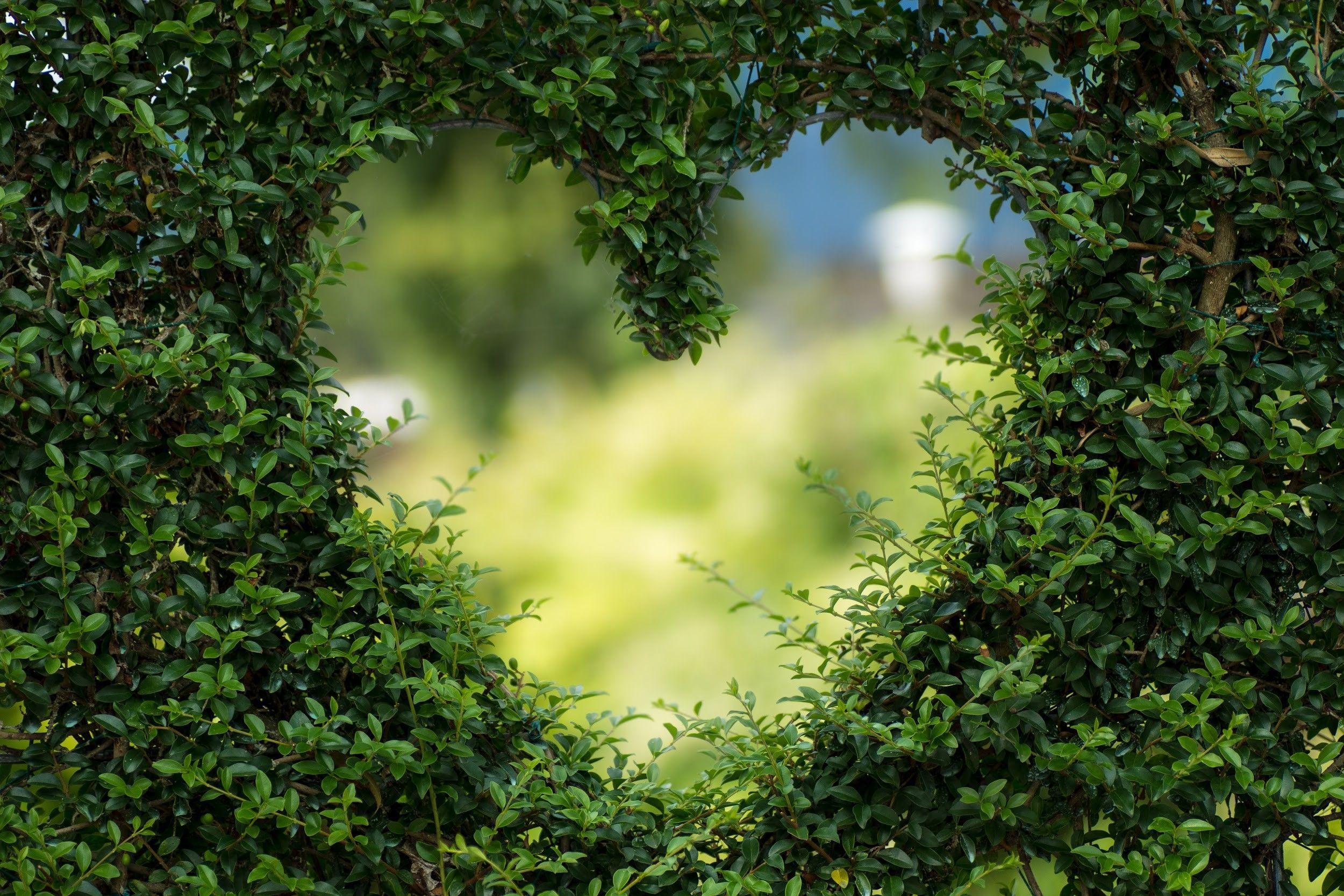 Valentijnsdag; Zo creëer je een Romantische Tuin