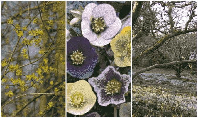 Checklist voor de tuin in februari
