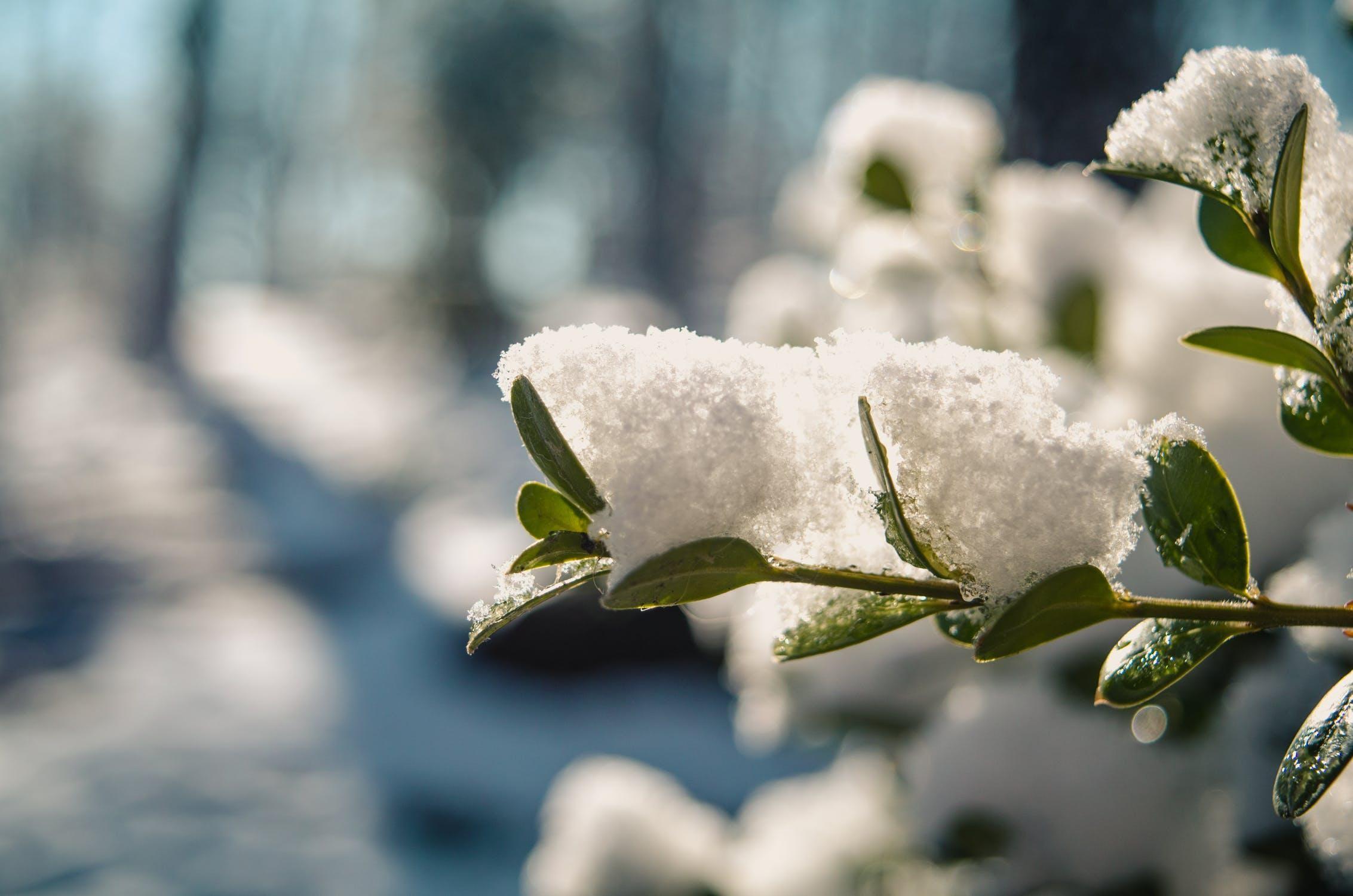 Checklist: is jouw tuin klaar voor de winter?