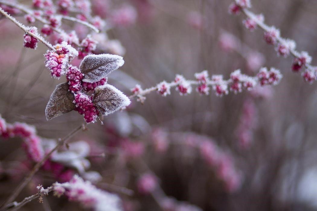 Optimaal genieten van je tuin in de winter