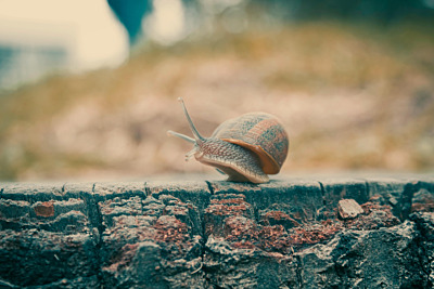 Hét geheim om van de slakken in jouw tuin af te komen!