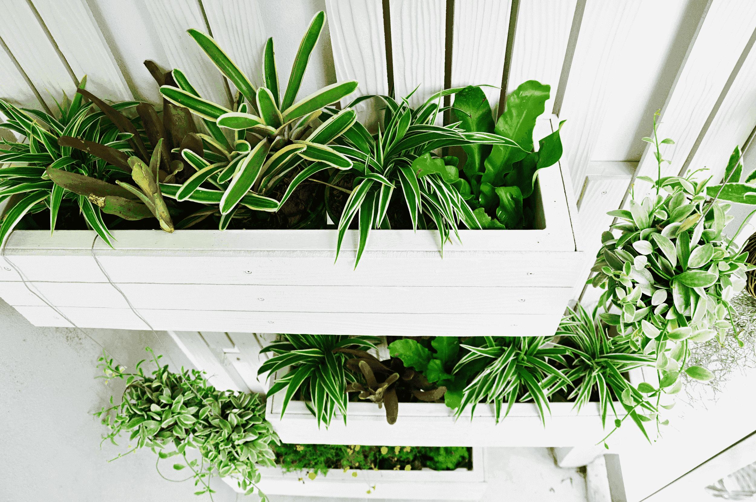Vertical tuin