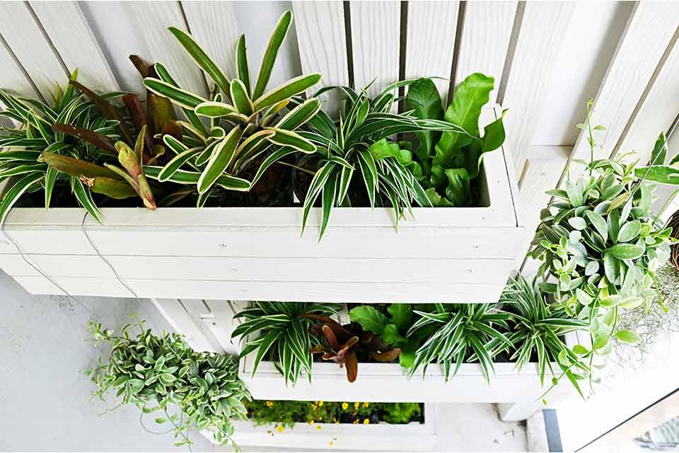 Plantenbakken aan de muur