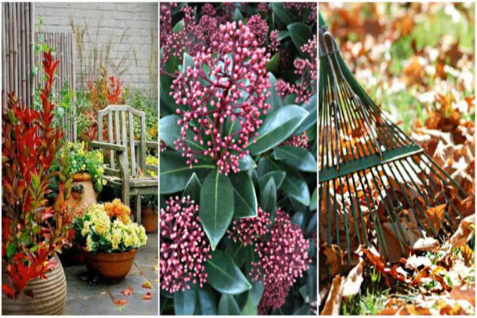 tuin oktober