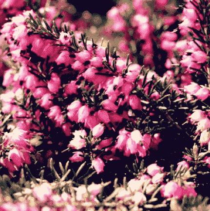 Groene bloemen
