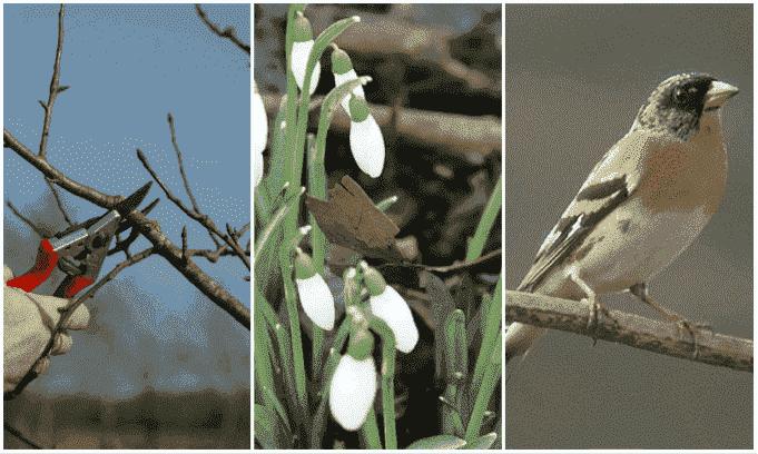 tuin februari