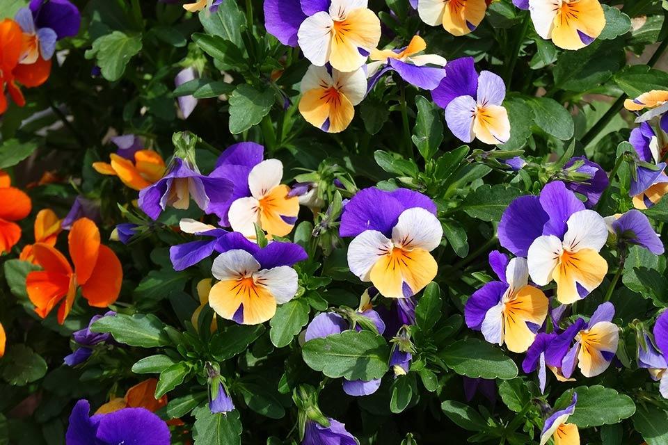 gebruik-van-kleur-in-je-tuin